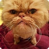 Adopt A Pet :: Brandy - Columbus, OH