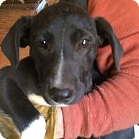 Adopt A Pet :: Binki - Hohenwald, TN