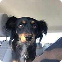 Adopt A Pet :: Betty - Rosamond, CA