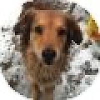 Adopt A Pet :: Norman - Denver, CO