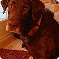 Adopt A Pet :: Rupert - Lewisville, IN