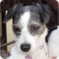 Adopt A Pet :: Wilma - Los Angeles, CA