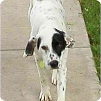 Adopt A Pet :: Whisper - Milwaukee, WI