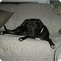 Adopt A Pet :: Leo - Courtesy Post - Cincinnati, OH
