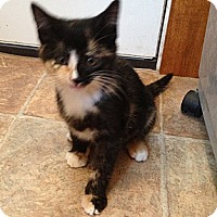 Adopt A Pet :: Belle - Troy, OH