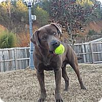 Adopt A Pet :: Huck - Hixson, TN