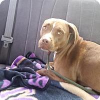 Adopt A Pet :: Juno - Scottsdale, AZ