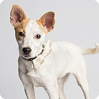 Adopt A Pet :: Ariana - Ogden, UT