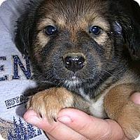 Adopt A Pet :: Gillingham - Glastonbury, CT