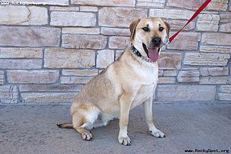 Labrador Retriever/Dalmatian Mix Dog for adoption in Newcastle, Oklahoma - Chistery