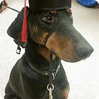 Adopt A Pet :: Macy - Sinking Spring, PA