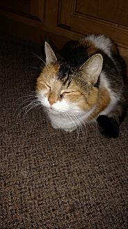 Calico Cat for adoption in Covington, Pennsylvania - Callie