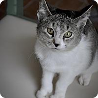 Adopt A Pet :: DEER (unique paws, AMAZING!!!) - New Smyrna Beach, FL