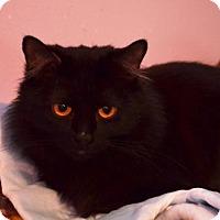 Adopt A Pet :: J Lo - Brownsboro, AL