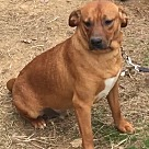 Adopt A Pet :: General