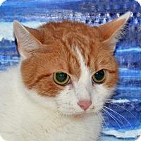 Adopt A Pet :: Dusty - Englewood, FL