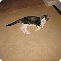 Adopt A Pet :: Magic Mike - Grand Rapids, MI