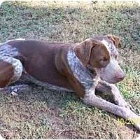 Adopt A Pet :: Knucklehead - York, SC