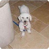 Adopt A Pet :: Ryley - Scottsdale, AZ