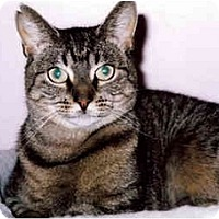 Adopt A Pet :: Twinks - Medway, MA