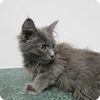 Adopt A Pet :: Zane - Norwich, NY