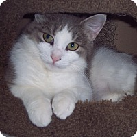 Adopt A Pet :: Deedee - brewerton, NY