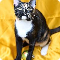 Adopt A Pet :: Joan Rivers - Chattanooga, TN