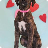 Adopt A Pet :: Sydney - Waldorf, MD