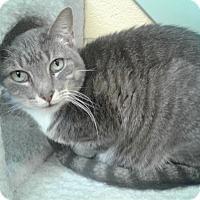 Adopt A Pet :: Cosmo - Lake Charles, LA
