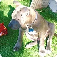 Adopt A Pet :: Denver - West Los Angeles, CA