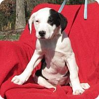 Adopt A Pet :: Twix - Providence, RI