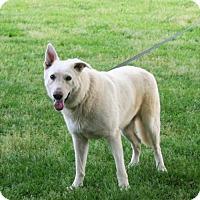 Adopt A Pet :: Aeros Heartworm Negative - Holly Hill, SC