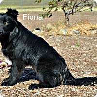 Adopt A Pet :: Fiona - Yreka, CA