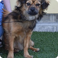 Adopt A Pet :: Griffin - Los Angeles, CA