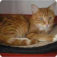 Adopt A Pet :: Betsey Johnson - El Cajon, CA
