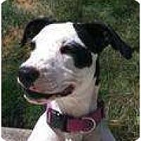 Adopt A Pet :: Lexi - Alliance, NE