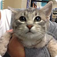 Adopt A Pet :: Miss Kitty - Pittstown, NJ