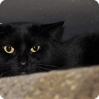 Adopt A Pet :: Romy - Lombard, IL