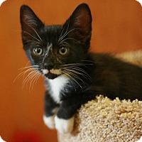 Adopt A Pet :: Emma - Canoga Park, CA