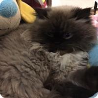 Adopt A Pet :: Kenny - Medina, OH