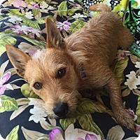 Adopt A Pet :: Ronald - Knoxville, TN
