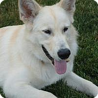 Adopt A Pet :: Milo - Marlton, NJ