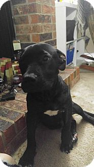 Pit Bull Terrier Mix Dog for adoption in Wichita Falls, Texas - Sid