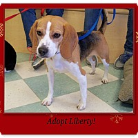 Adopt A Pet :: LIBERTY - Ventnor City, NJ