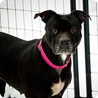 Adopt A Pet :: Juliet - Huntington, NY