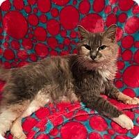 Adopt A Pet :: Diana - Tampa, FL