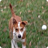 Adopt A Pet :: Aston - Kingwood, TX