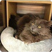 Adopt A Pet :: Polka - Winder, GA