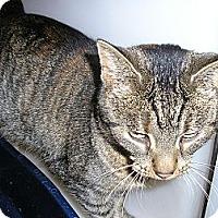 Adopt A Pet :: Avacado - Ludington, MI