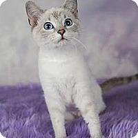 Adopt A Pet :: Mila - Eagan, MN